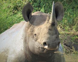 safari tours south africa
